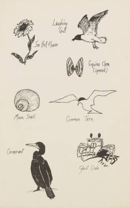 """Illustrations of local plant and animal life in Ocracoke, from """"Historic Ocracoke."""""""