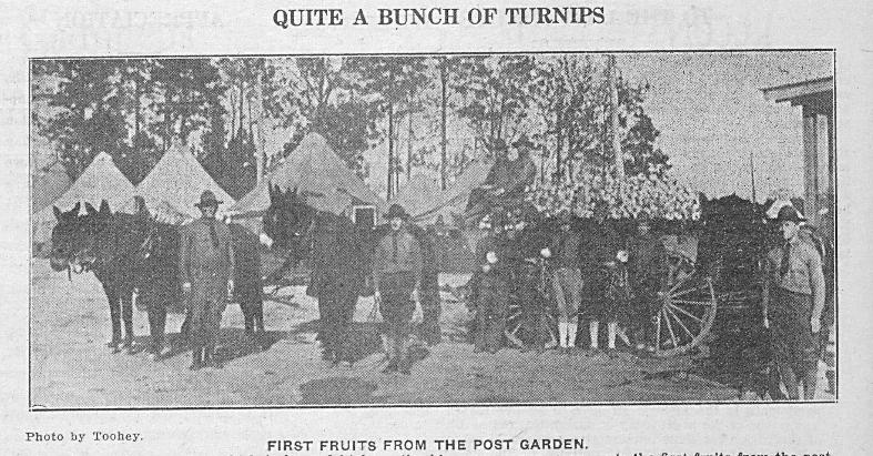 Caduceus, November 23, 1918