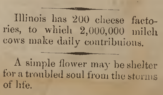 On cheese and flowers, July 5, 1876