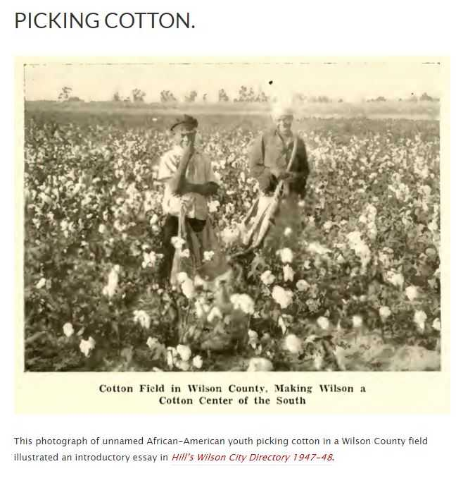 black and white photograph of two adults picking cotton in a field