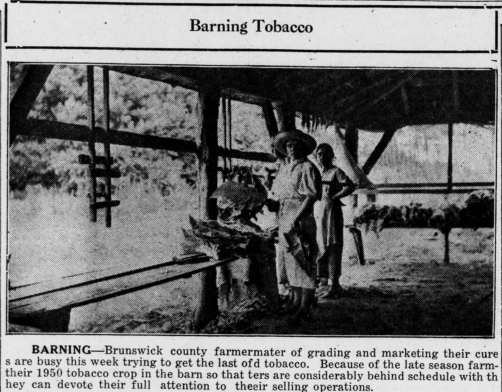Barning tobacco. Image shows two adults at a table with tobacco.